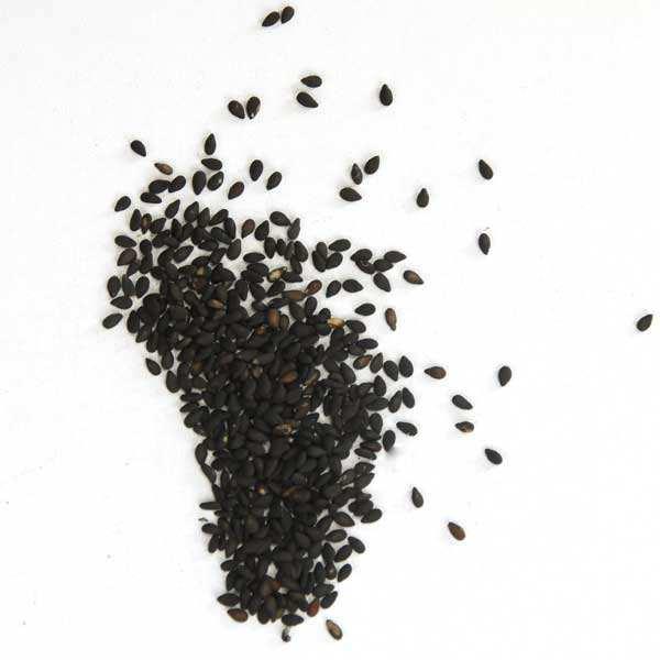Graines de sésame noir grillé