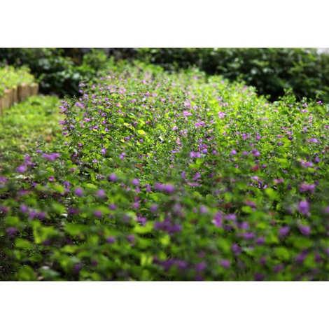 La grange au thé - Sirop de thé d'aubrac