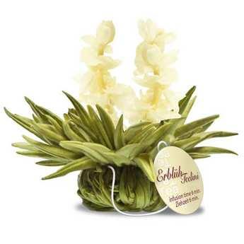 Creano - Fleurs de thé avec ficelle Tealini Ciel de Jasmin