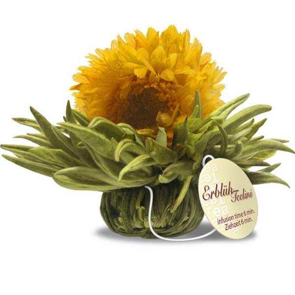 Marigold flower with vanilla