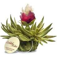 Creano - Fleurs de thé avec ficelle Tealini Perle de pêche