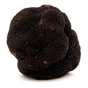 Trufficulteurs de Lozère - Fresh Black Truffle - (Tuber Melanosporum)