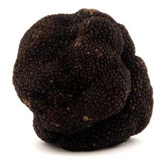 Trufficulteurs de Lozère - Truffe noire fraîche - Tuber melanosporum