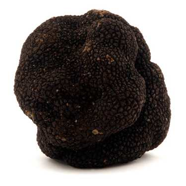 Fresh Black Truffle - (Tuber Melanosporum)