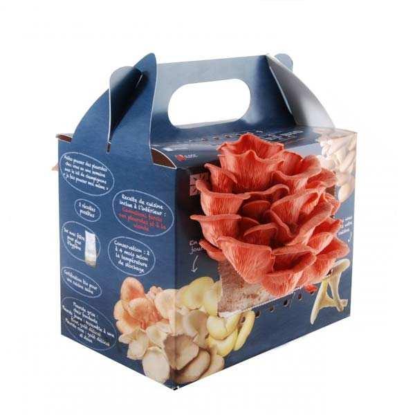 kit de culture de pleurotes roses bio radis et capucine. Black Bedroom Furniture Sets. Home Design Ideas