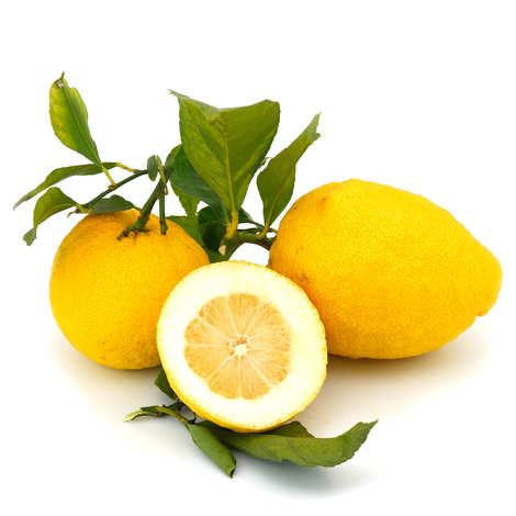 Esatitude - Citrons de Menton IGP