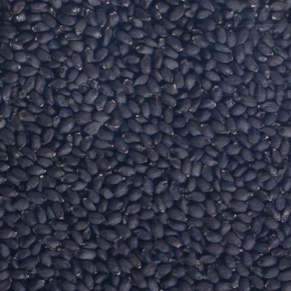 Organic Basil - Seeds To Sprout