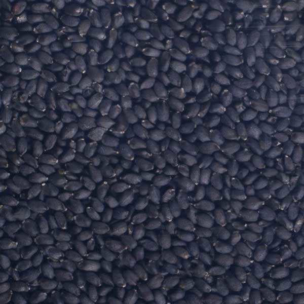 Basilic bio - Graines à germer