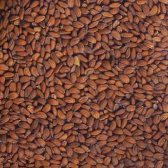 Germline - Organic Cress - Seeds To Sprout