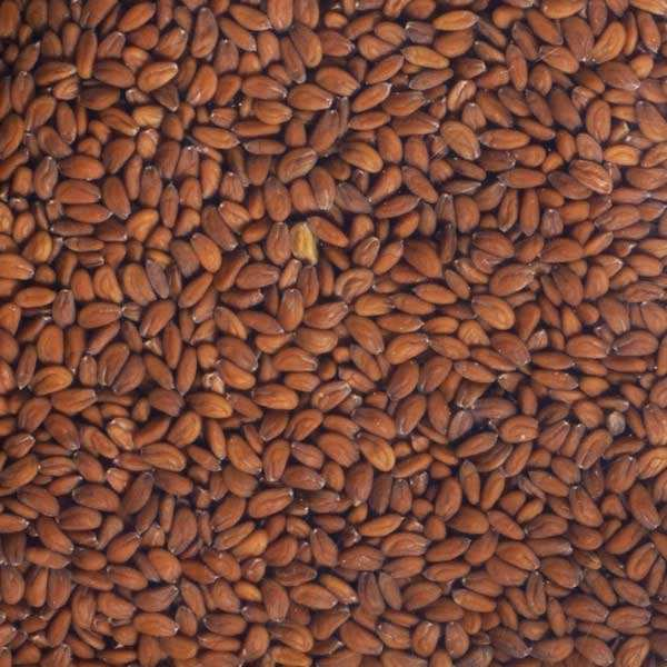 Organic Cress - Seeds To Sprout