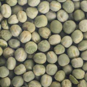Germline - Pois vert bio - Graines à germer