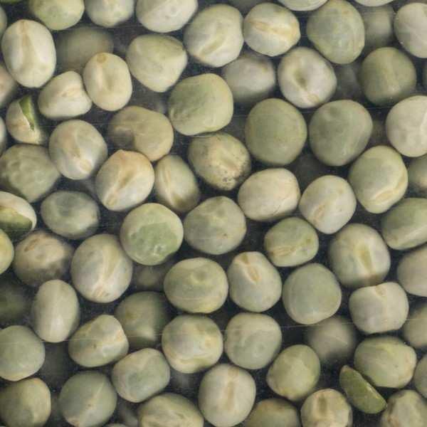 Pois vert bio - Graines à germer