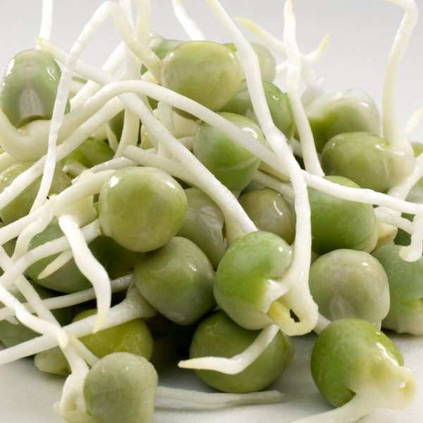 Organic Green Peas - Seeds To Sprout