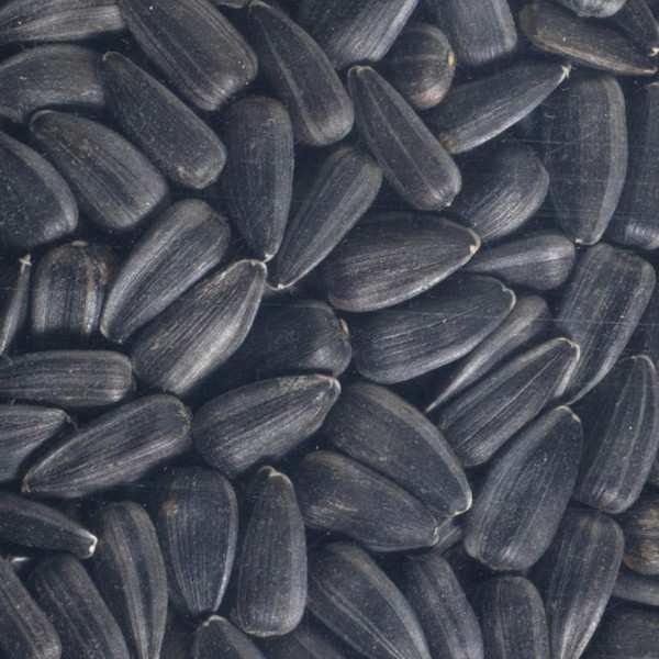 Tournesol entier bio - Graines à germer