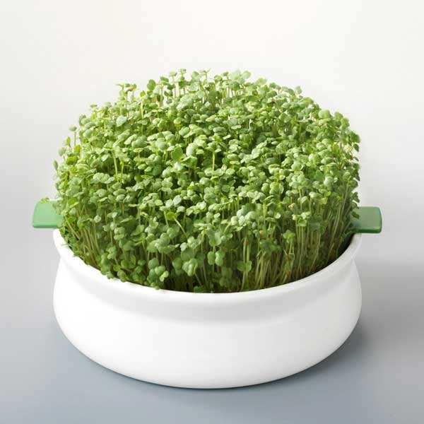 Coupelle de germination (germoir à graines mucilagineuses)