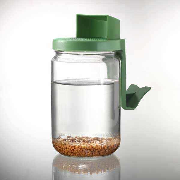 Germoir bocal en verre