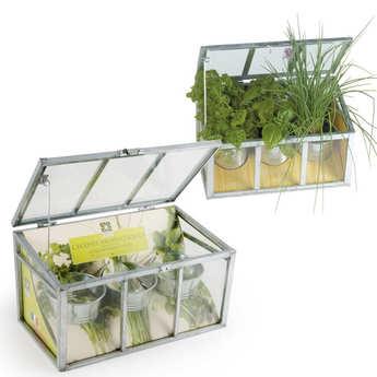 Radis et Capucine - Serre châssis plantes aromatiques