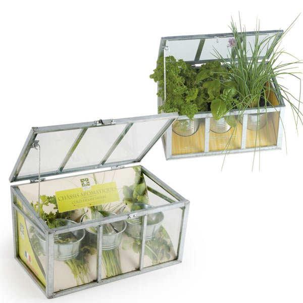 Serre châssis plantes aromatiques