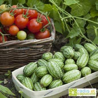 Radis et Capucine - Jardinière de petits légumes à croquer (à faire pousser)