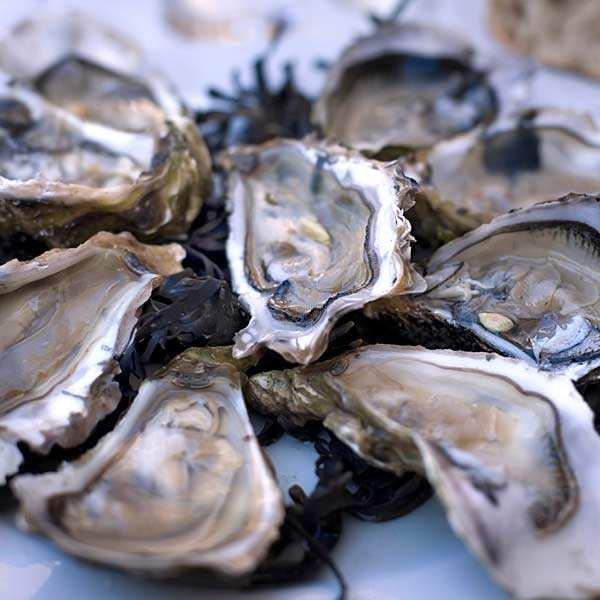 Huîtres fines de claires - Marennes Oléron - huîtres creuses numéro 2