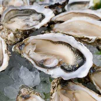 Jean-Michel Seguin - Huîtres fines de claires - Marennes Oléron - huîtres creuses numéro 3