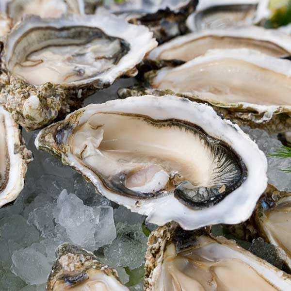 Huîtres fines de claires - Marennes Oléron - huîtres creuses numéro 3