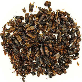 Insecteo - Crickets with Yellow Curry