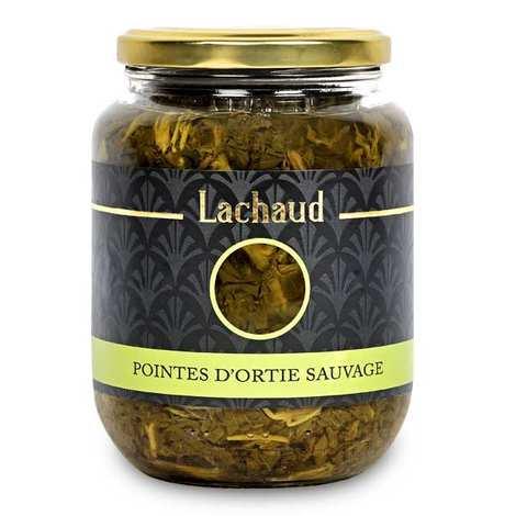 Lachaud - Pointes d'ortie sauvage de France