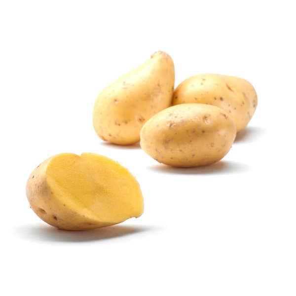 Pommes de terre Andean Sunside