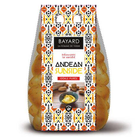 Bayard - Pommes de terre Andean Sunside