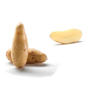 "Bayard - ""Mini Ratte du Santerre"" Potatoes"