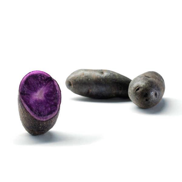 Pommes de terre bleues Prunelle