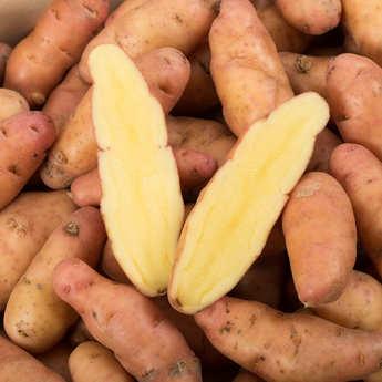 "Bayard - ""Corne de Gate"" Potatoes"