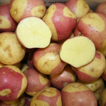 Bayard - Pommes de terre Miss Blush