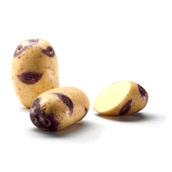 Bayard - Pommes de terre Blue Belle