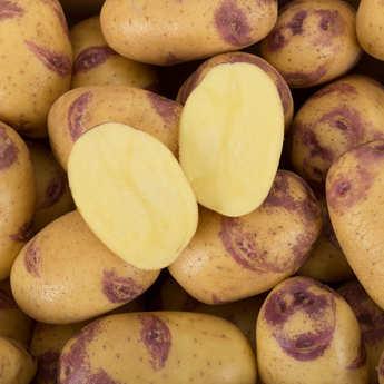 "Bayard - ""Blue Belle"" Potatoes"