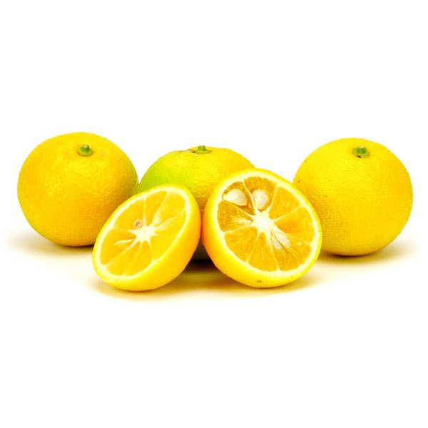 Kabosu frais