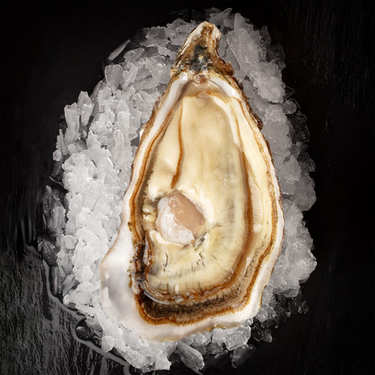 Deep Oysters from Cancale - Tsarskaya Variety