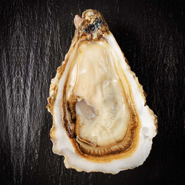 Deep Oysters from Cancale