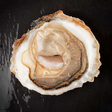 Huîtres plates de Cancale - Belon
