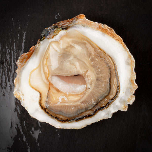 Flat Oysters from Cancale - Belon