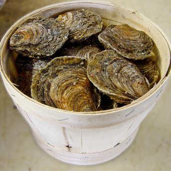 Les Parcs Saint Kerber - Flat Oysters from Cancale - Belon