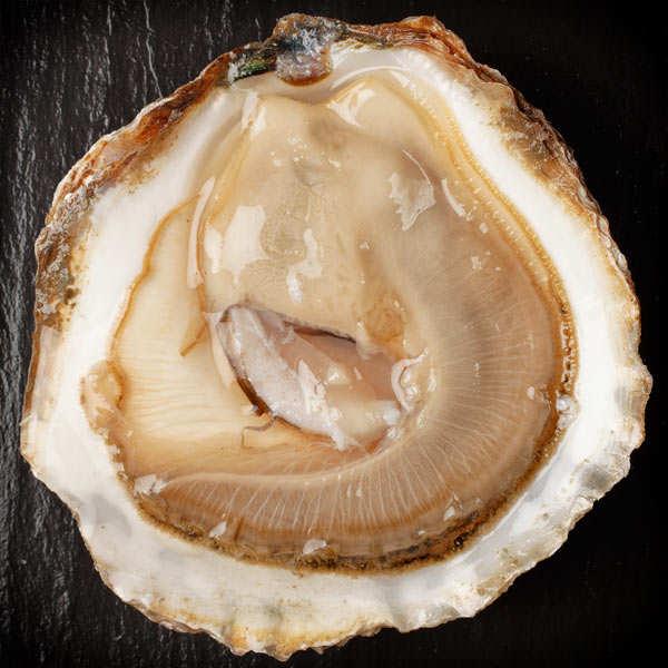 Huîtres plates de Cancale - Pied de Cheval