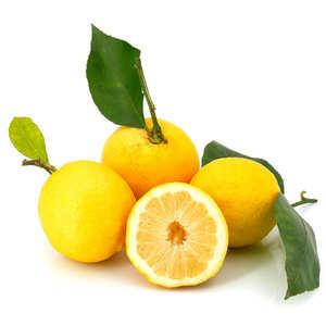 La Maison du Citron - Citron frais de Menton IGP Bio