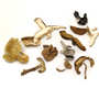 Borde - Mélange de champignons forestiers séchés