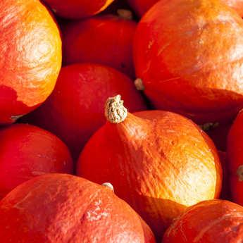 Bertrand Lavolte - Organic Pumpkin