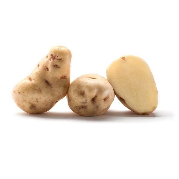Pommes de terre Institut de Beauvais