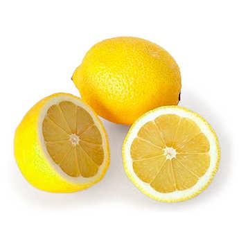 Agrumes Bachès - Citron mexicain