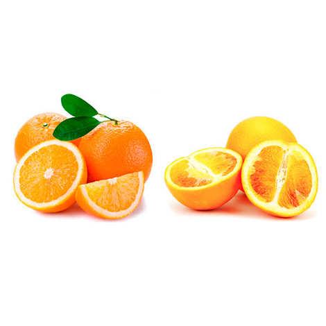 - Lot oranges sanguines et Washington navel bio de Sicile