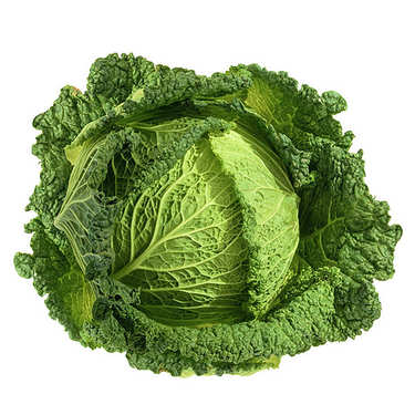 Organic Savoy Cabbage from France